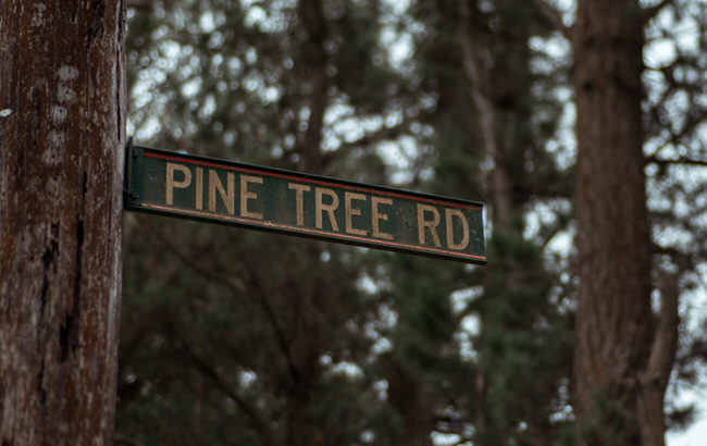 Littlewoods Wingello  Pine Tree Rd.